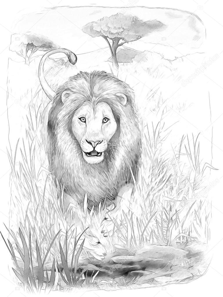 Safari - León - página - ilustración para los niños para colorear ...
