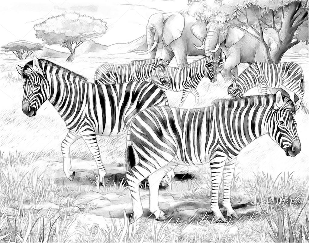 Safari - Zebras and elephants - coloring page- illustration for the children