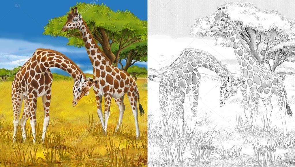 Safari - jirafas - página - ilustración para los niños para colorear ...