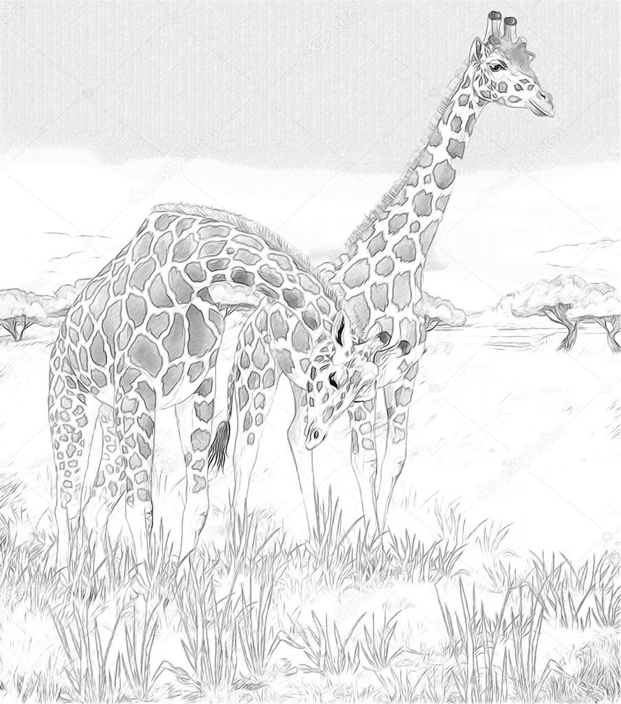 safari giraffes coloring page illustration for the children