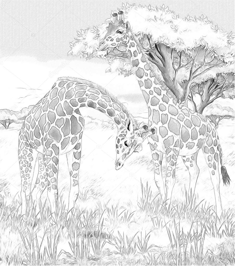 Kleurplaten Van Giraffen.Safari Giraffen Kleurplaten Pagina Afbeelding Voor De Kinderen