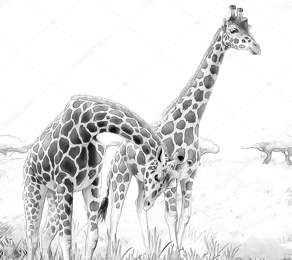 Safari - Giraffen - Färbung Seite - Illustration für die Kinder ...