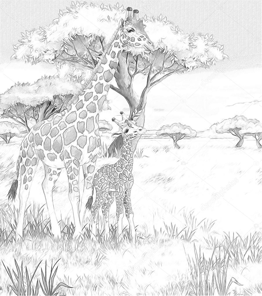 Safari - giraffes - coloring page - illustration for the children ...