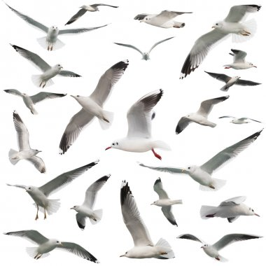 birds set isolated