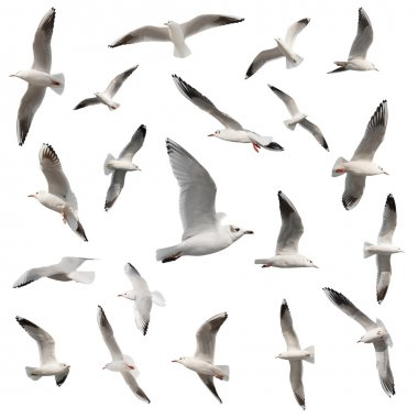 birds collection isolated on white