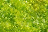 seagrass macro