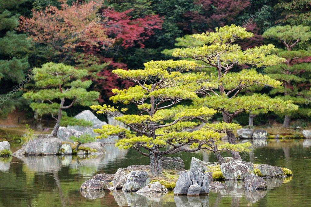 zen pine tree