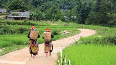 Red Dao Hilltribe women in Sapa