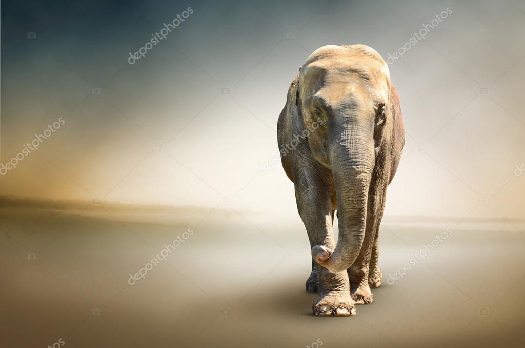 Luxury photo of elephant