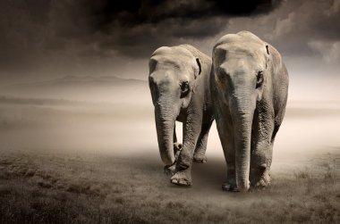"Картина, постер, плакат, фотообои ""пара движущихся слонов "", артикул 12865252"