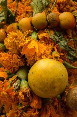 Oranges, mandarins and flowers