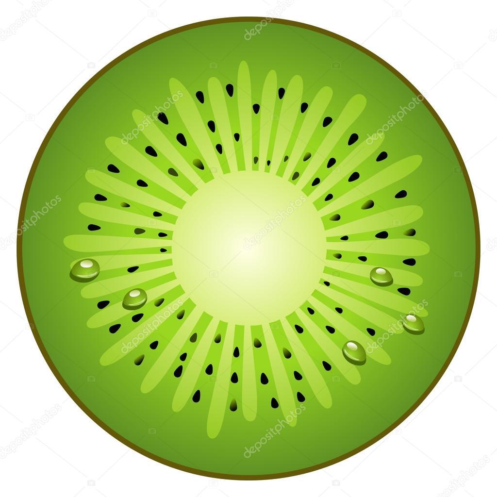 Half circle fruit kiwi