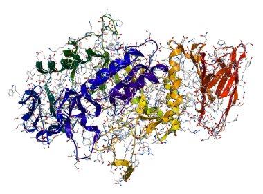 Alpha-Amylase, an enzyme that hydrolyses polysaccharides, such a