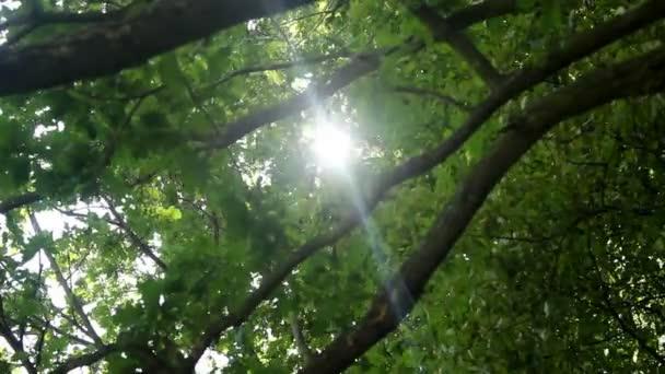 a nap a fák