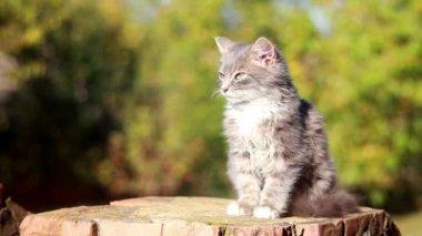 Roztomilé dospívající kočička vids