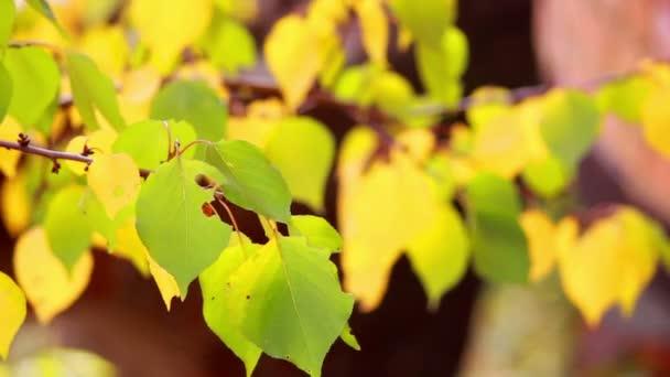 žlutá podzimní listí