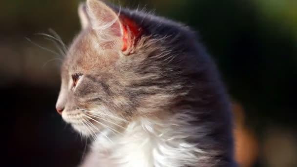 niedliches Kätzchen