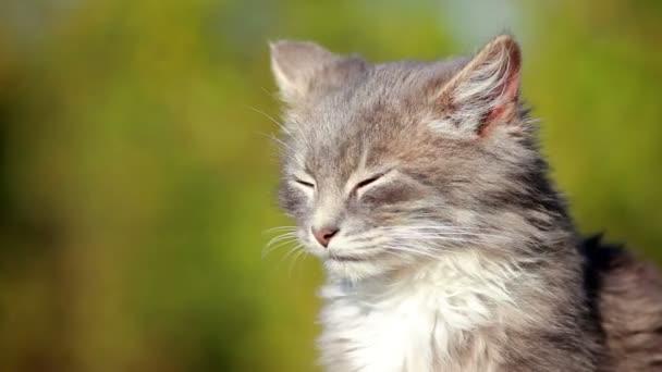 roztomilý kotě