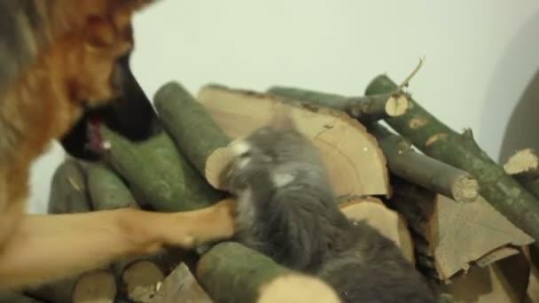pejsek a kočka