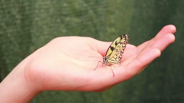 motýl na straně