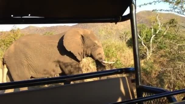 a vad elefánt