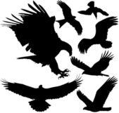 Siluette di vettore di uccelli rapaci (Aquila, Falco, Falco, avvoltoio Grifone ecc.) su priorità bassa bianca. A strati. Completamente modificabili