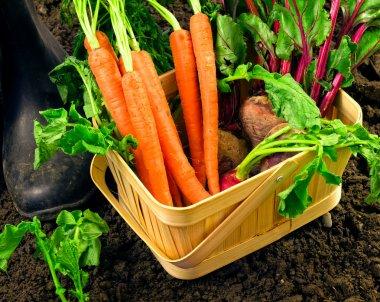 Fresh garden harvest of vegetables