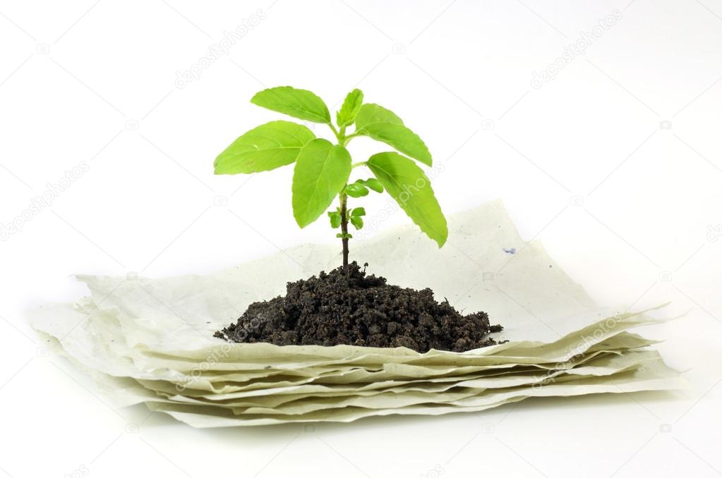 Small plant on stack of recycle paper