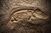 Fotografie Modell Dinosaurier Fossil