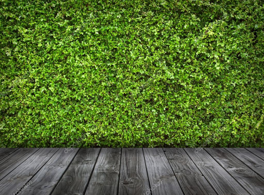 Green leaves wall and old wood floor for background