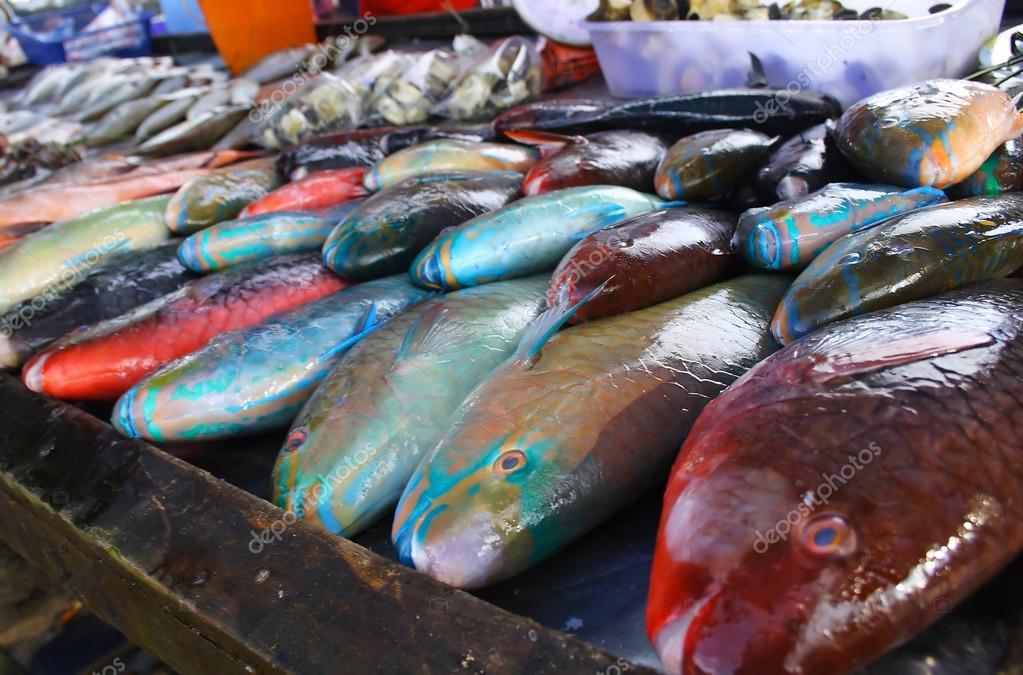 Parrot fish at phuket