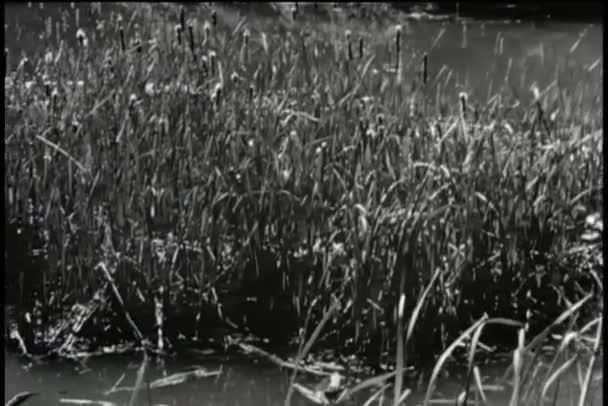 Panning swamp