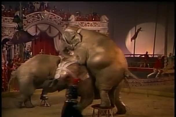 tanec slonů v cirkuse