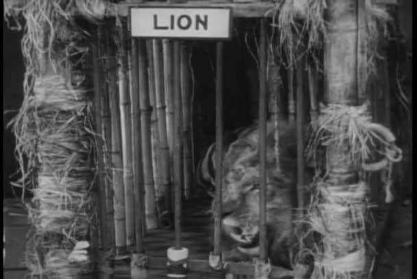 Panoramica di animali selvatici in gabbia