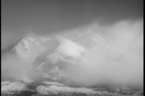 vlci procházky po sněhu kryté lesní