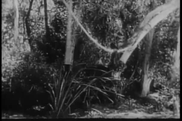 Monkey running through jungle