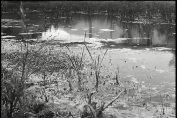 Langsames Schwenken des Sumpfes