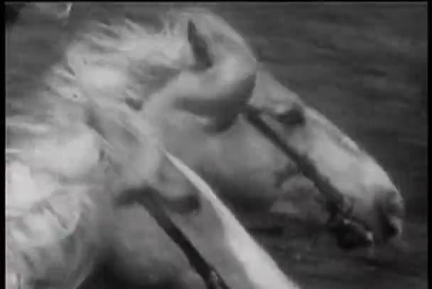 Közeli kép a két ló futás nyak- és nyak verseny