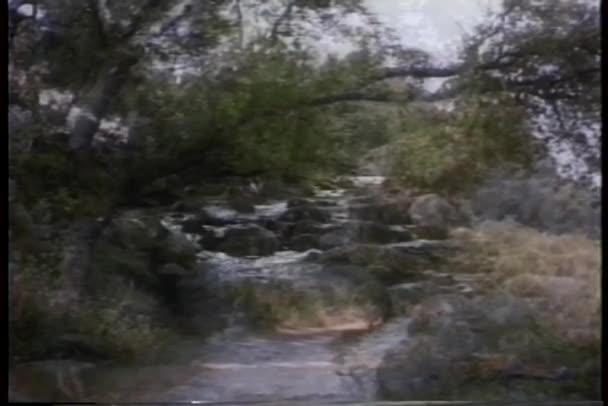 Sestřih z údolí a potok