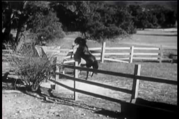 dva koně, které trčely v ohradě