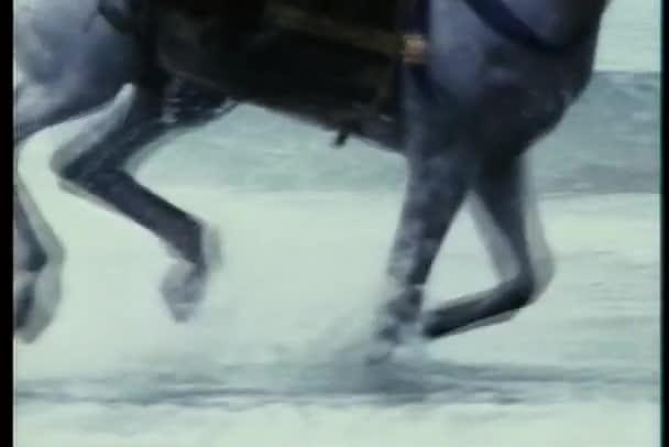 detail koně tryskem přes vody na pobřeží