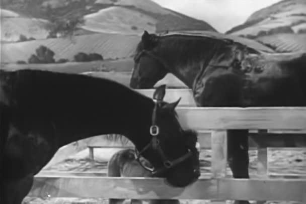 dva koně a hříbě v koňské ohradě