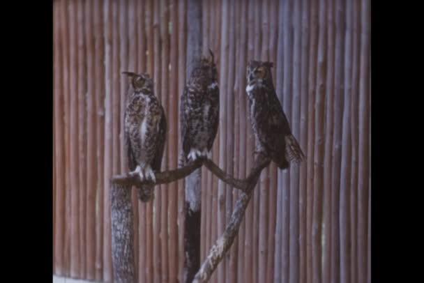 gufi seduto sul ramo in giardino zoologico