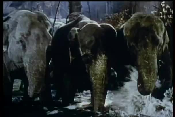 drei Elefanten, die im Wasser waten