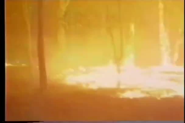 hasič se snaží uhasit zuřícího lesního požáru