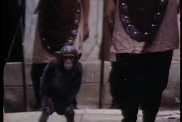 Monkey and soldier walking through a path of soldiers
