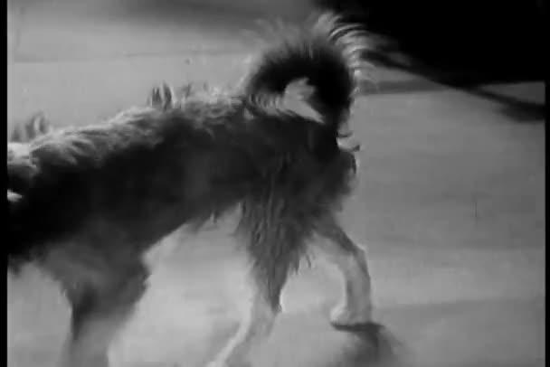 pes tlačí dveře otevřené a putování kolem domu