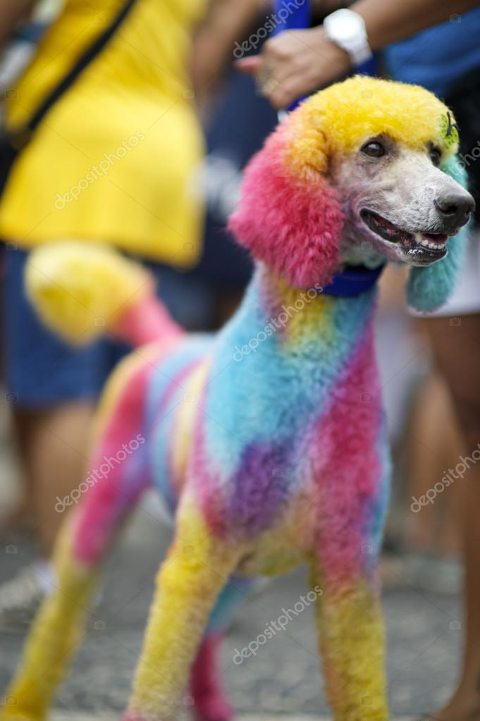 Chien Peint chien peint animaux carnaval de rio couleurs vives — photographie