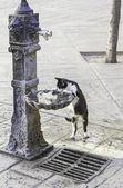 Fotografie Katze-Trinkwasser