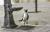 Fotografie Katze im Quellcode